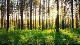 宏利圣得告诉你,为什么要保护环境?